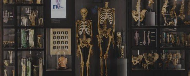Nākamnedēļ RSU atklās jauno Anatomijas muzeju
