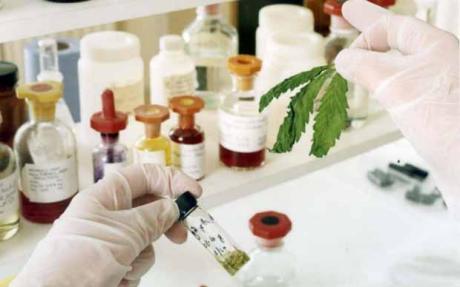 Francija atļauj lietot no marihuānas iegūtu medikamentu